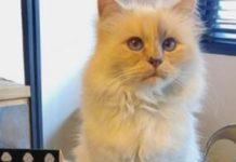 Γαλλία: Μια γάτα υποψήφια στις δημοτικές εκλογές