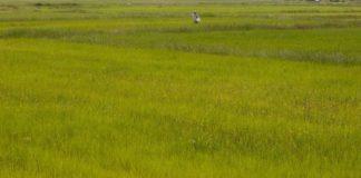 Η γεωργία μπορεί να μετατραπεί, από υπαίτιο και θύμα, σε σωτήρα για την κλιματική αλλαγή