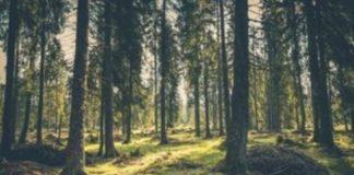 Κ. Χατζηδάκης: Οι βασικοί άξονες του νέου περιβαλλοντικού νομοσχεδίου