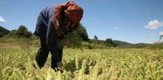 Μ. Βορίδης: Οι κατώτατες εγγυημένες τιμές είναι καταστροφή για τους αγρότες