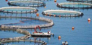 Νέες προοπτικές για την ελληνική υδατοκαλλιέργεια