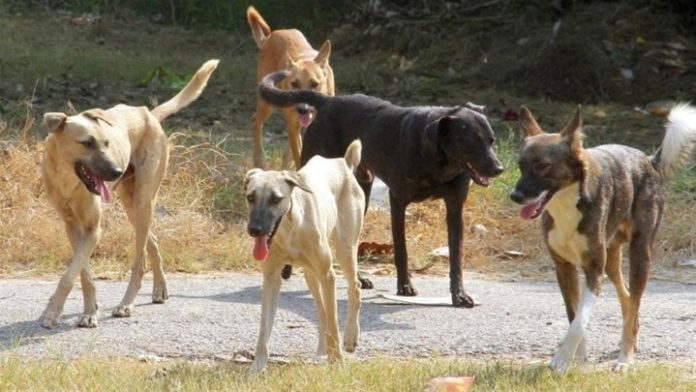 Συμμαχία των δήμων Ωραιοκάστρου και Χαλκηδόνας για τη διαχείριση του ζητήματος των αδέσποτων ζώων