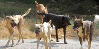 Μέριμνα του δήμου Θεσσαλονίκης για τη σίτιση των αδέσποτων ζώων