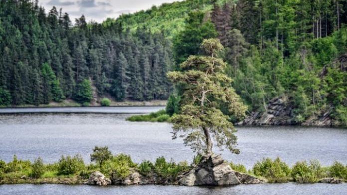 Στην Τσεχία το πιο όμορφο δέντρο της Ευρώπης