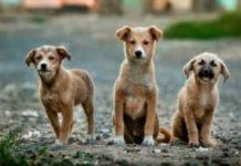 Στην ιστοσελίδα της ΚΕΔΕ η βεβαίωση για τη φροντίδα αδέσποτων ζώων