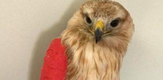 Ἐκκληση για οικονομική βοήθεια στα τραυματισμένα ζώα της άγριας πανίδας