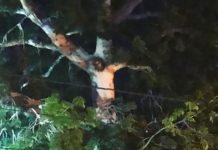 Προσκυνούν δέντρο που πιστεύουν ότι εμφανίστηκε το πρόσωπο του Χριστού