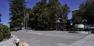 Μέριμνα για τα αδέσποτα της Θεσσαλονίκης