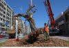 Τριάντα αιωνόβιες ελιές αλλάζουν το κέντρο της Θεσσαλονίκης