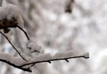 Βουλγαρία: Προειδοποίηση για ισχυρές χιονοπτώσεις σε όλη τη χώρα