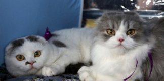 Οι γάτες κολλάνε τον κορονοϊό και τον μεταδίδουν σε άλλες γάτες, αλλά οι σκύλοι πολύ λιγότερο