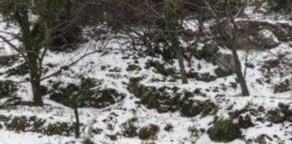 Τρίκαλα: Χιονίζει στα ορεινά