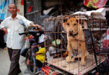 Κίνα: Ιστορικό «στοπ» στην κατανάλωση σκύλων και γατιών στη Σεντζέν!