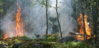 Αυστραλία: Οι θάνατοι που προκλήθηκαν από τον καπνό των πυρκαγιών