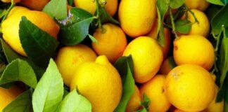 Λεμόνι: Οι ευεργετικές ιδιότητές του για τα λουλούδια του βάζου