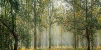 Αυστραλία: Σοβαρός κίνδυνος πυρκαγιών και φέτος για τα δάση της