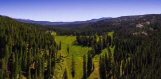 Η κλιματική αλλαγή «χαμηλώνει» τα δέντρα των δασών