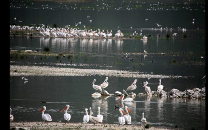 Η περιφέρεια Θεσσαλίας προβάλει τους 76 υγρότοπους της περιοχής
