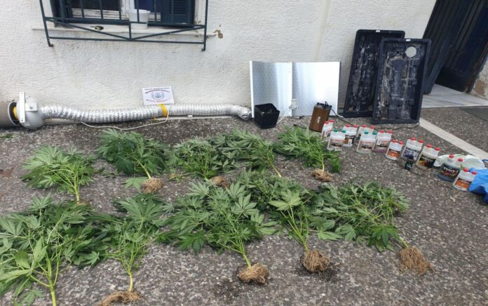 Συνελήφθη 29χρονος για καλλιέργεια κάνναβης