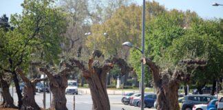 Ζέρβας: «Έργο τέχνης η οδός Αγγελάκη»