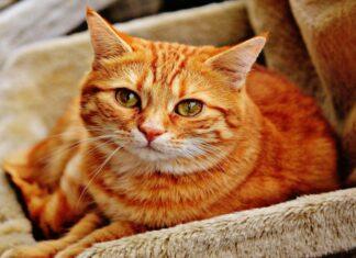 Δέκα μυστικά για να σας αγαπήσουν περισσότερο οι γάτες σας