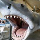 """Ο καρχαρίας από τα """"Σαγόνια του Καρχαρία"""" στο μουσείο των Όσκαρ"""